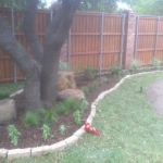 How to Manage Tree Growth