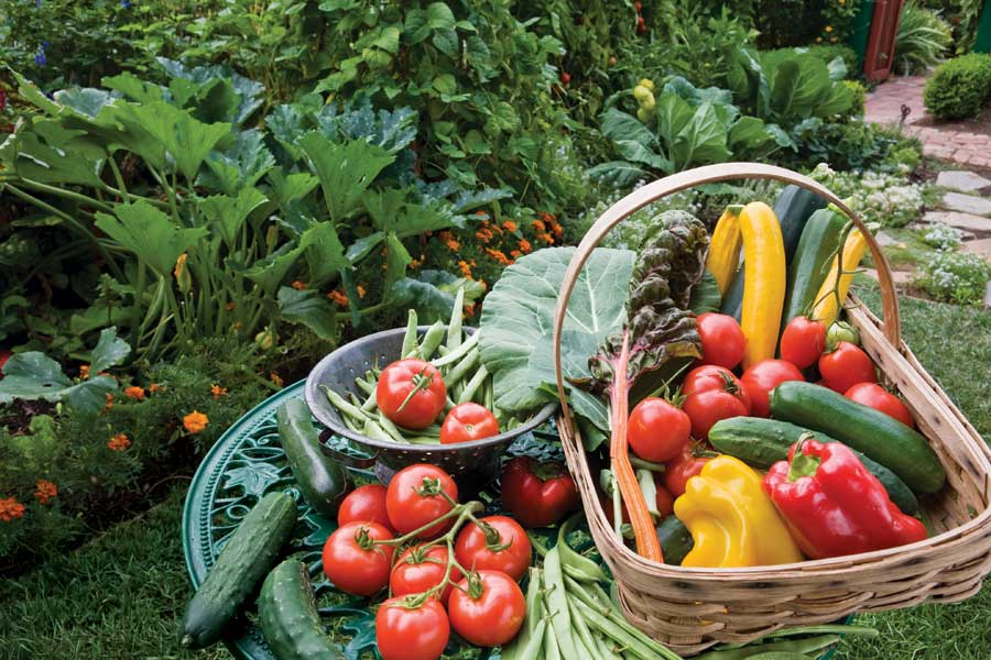 Gardening Advice to Harvesting Fresh Produce Regularly