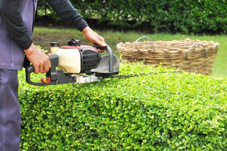 What Time of Year Should You Trim Trees and Bushes?