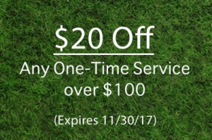 one time service special