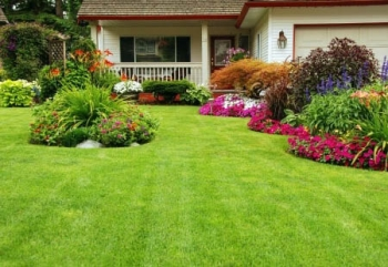 lawn care in mckinney, tx
