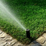 Summer Watering and Fertilization