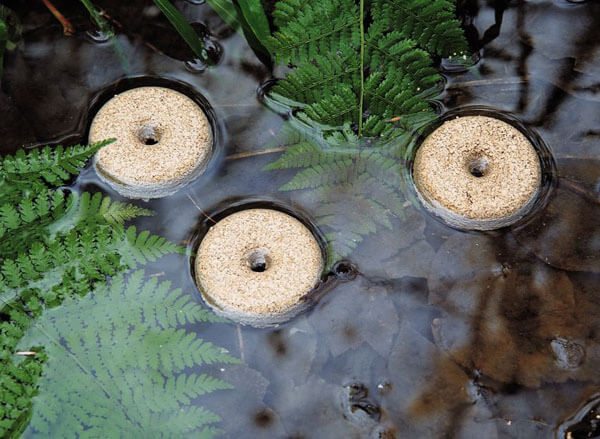 How To Have A Mosquito Free Pond Stop Breeding Mosquitoes