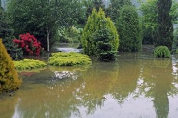 FloodedGarden