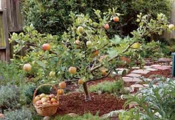 pruning-trees jpg