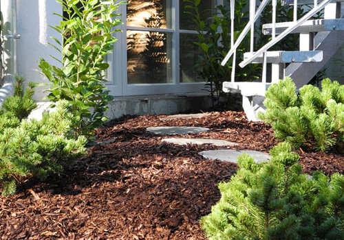 Protect Plants For Winter: How To Put Mulch Around Plants?