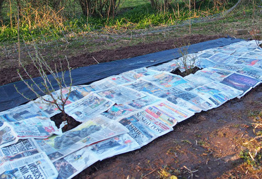 Protect Plants For Winter How To Put Mulch Around Plants Jc S