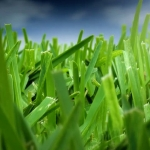 How Often Should You Mow Your Lawn in Winter