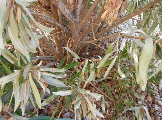 damage-plants