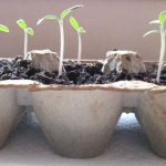 Effectively Storing Your Seeds for Next Spring
