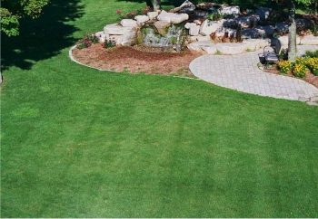 lawn-services-little-elm