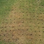 Dethatch or Aerate Before Overseeding