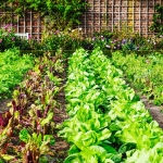 Spring Vegetables To Grow in Texas