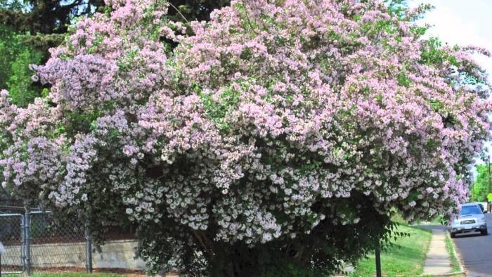 heat tolerant shrubs