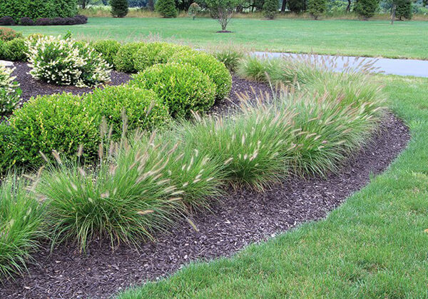 Best 5 Ornamental Grasses for Texas Landscapes
