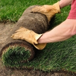 How To Sod Grass