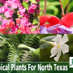 Tropical Plants For North Texas