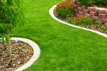 green grass lawn care tips