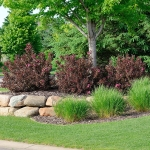 Protecting Your Trees and Shrubs For the Winter