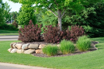 purple shrubs around tree