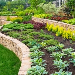 The Importance of Picking Healthy Plants for Your Garden