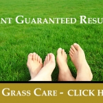 Basic Lawn Care For Common North Texas Grass