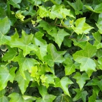 Gorgeous Ground Cover Plants to Enhance Your Yard