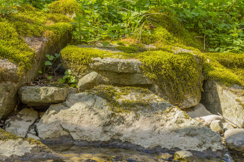 How to Grow Moss as a Ground Cover