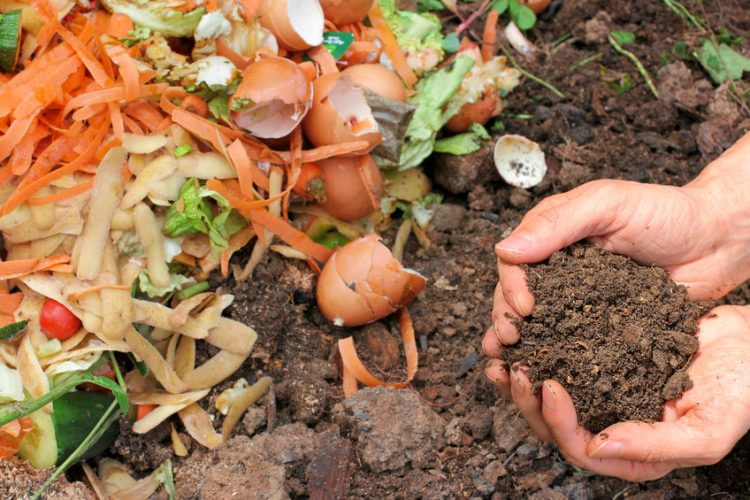 Composting 101: A Beginner's Guide to Compost