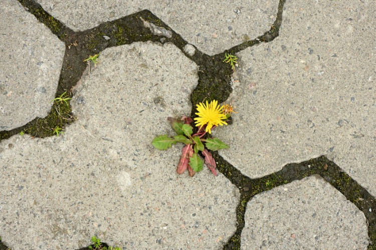 Natural Weed Killers for Pavers