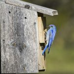 How a Birdhouse Can Attract Birds and Brighten Your Garden