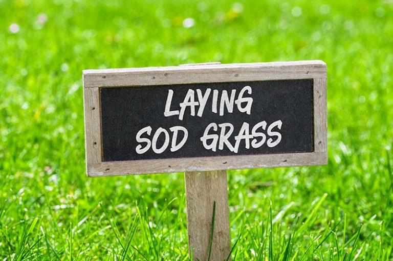 laying sod