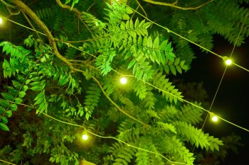 fairy lights among tree leaves at night