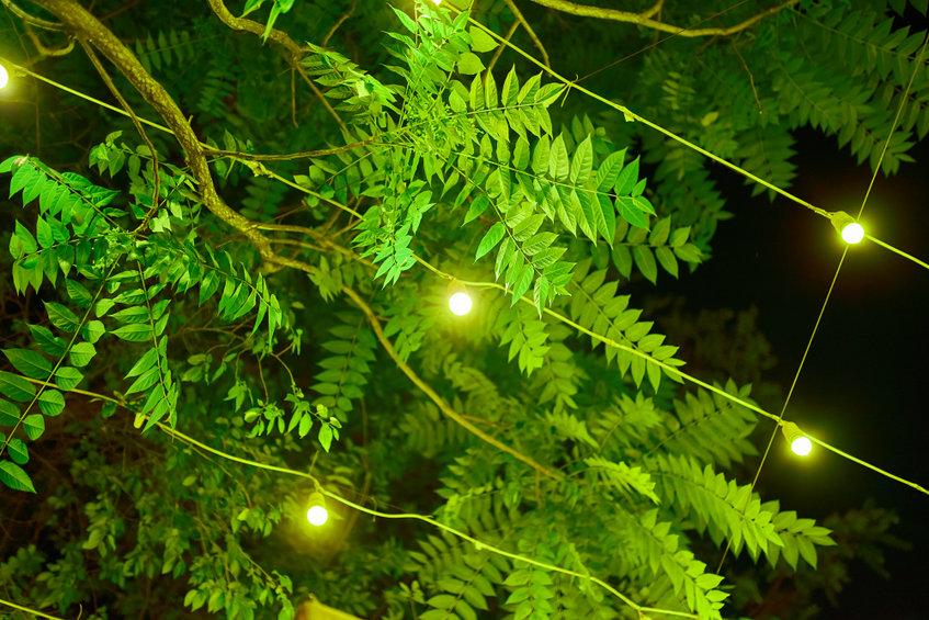 Outdoor Lighting: Enhance Your Backyard at Night